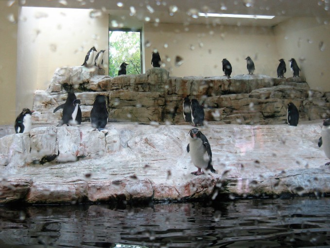 עולם הפינגווינים