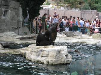 מופע האכלת אריות ים