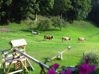 הפרות של משפחת אונטרגר יוצאות לאחו