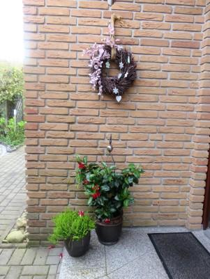 פרחי הלילך מקשטים את הכניסה לדירות הנופש