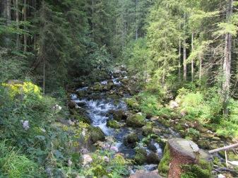 פלגי מים ביער הירוק