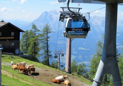 בפיסגת ההר מצפות לנו הפרות