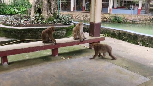 מערת הדגים ומקדש הקופים הפראיים - Fish Cave Mae Sai