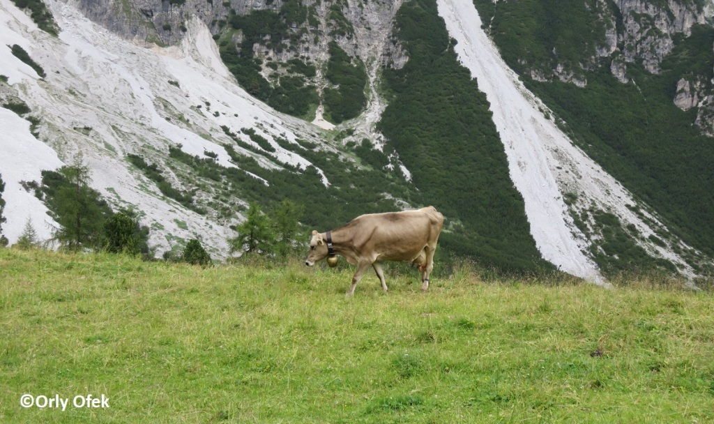 Tirol-Stubai-OrlyOfek-51