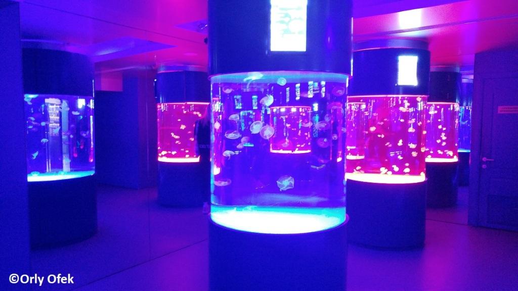 Orly-Ofek-Jellyfish-museum-Kiev-133