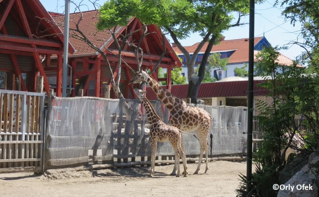 Budapest-Zoo-Orly-Ofek-48