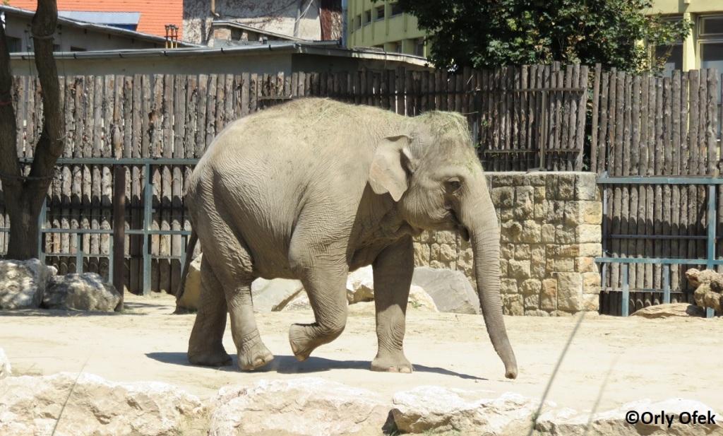 Budapest-Zoo-Orly-Ofek-50